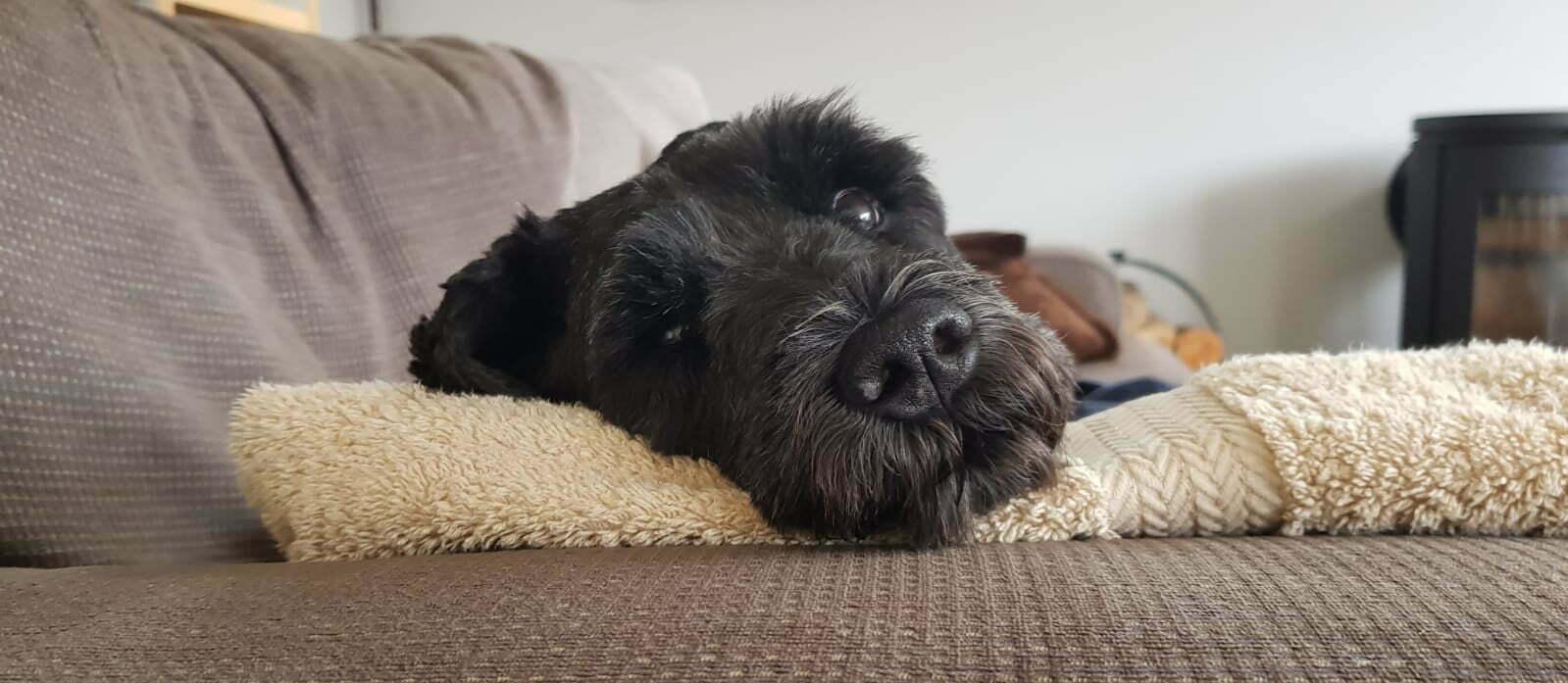 dog photo for personalised laptop sleeve
