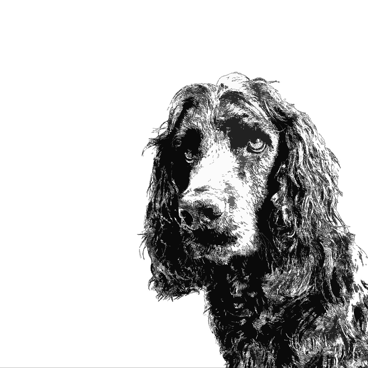 black cocker spaniel portrait in monochrome style